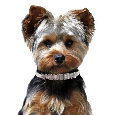 yorkie collars personalized rhinestone charm collar top pet gifts