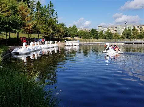 swan boats texas the woodlands township launches swan boats along the