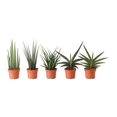 Kitchen Open Shelving Design sansevieria potted plant assorted 12 cm ikea