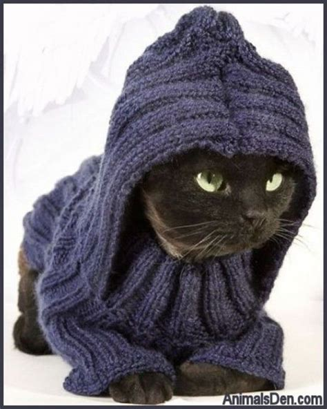 knit a cat sweater 33 best images about cats and knitting don t go