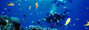 Tubbataha reefs natural park reef in philippines thousand wonders