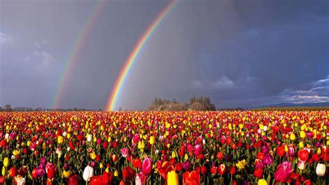 oregon double rainbow  flowers field hd rainbow