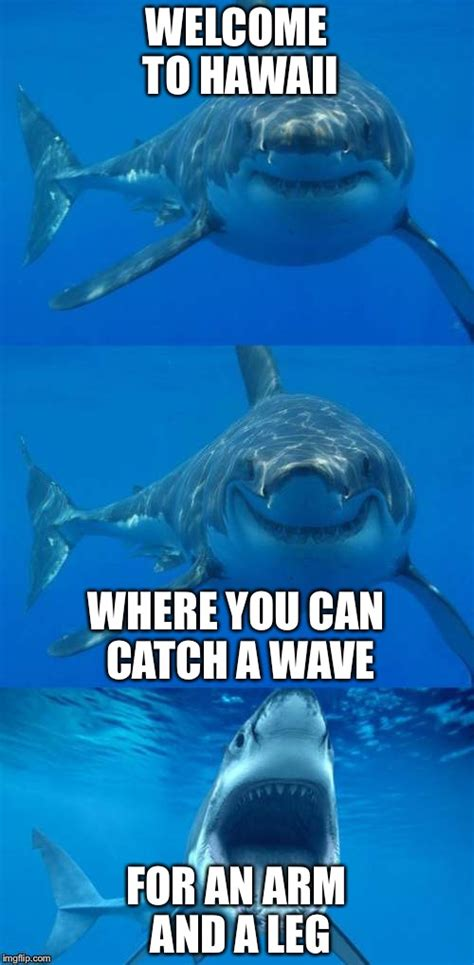 Hawaii Meme - bad shark pun imgflip