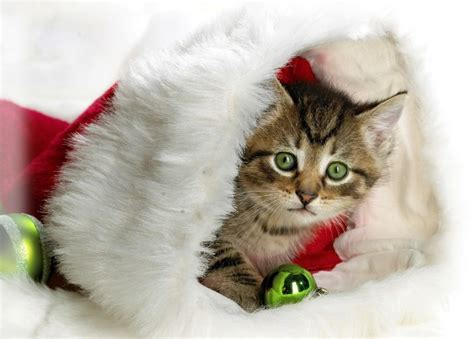 images of merry christmas kittens christmas wallpapers and images and photos 3d pencil