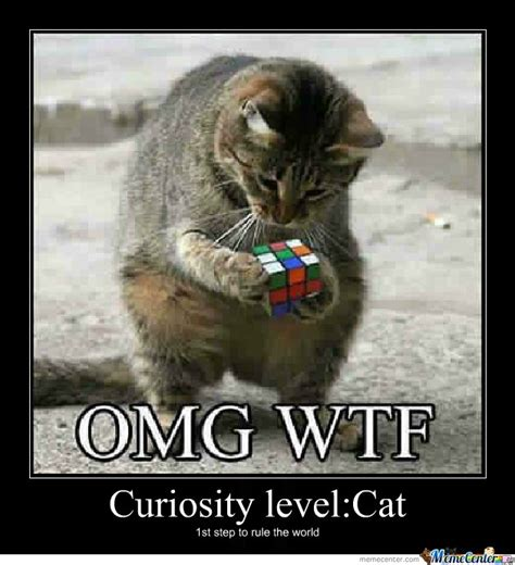 Curious Meme - curious cat by michael chane meme center