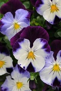 25 best ideas about photos of flowers on pinterest