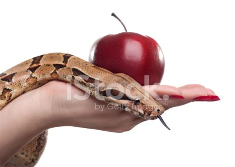 snake apple snake and apple stock photos freeimages