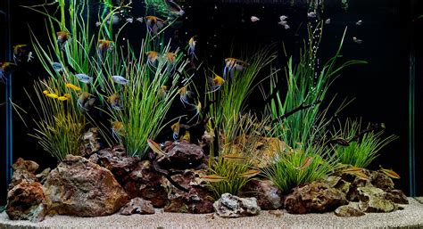 aquarium design wallpaper freshwater aquarium design ideas aquarium design group