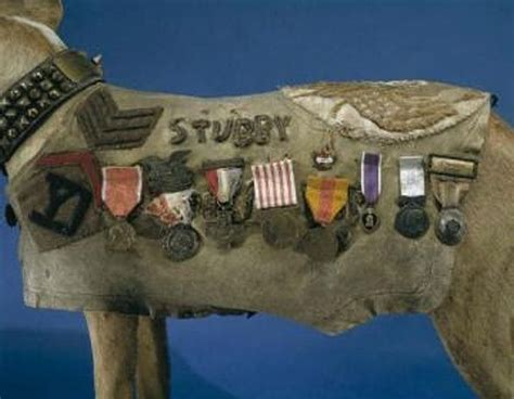Sgt Stubby Badass Of The Week 17 Best Images About Sergeant Stubby On Barking Soldiers And American Cross