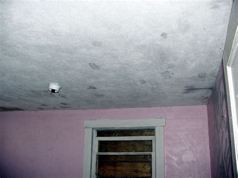 Footprints On Ceiling by Lost Destinations Inside Jackson House