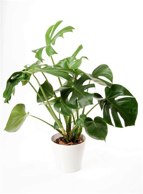 indoor plants    care
