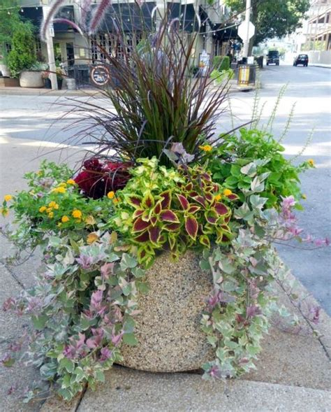 17 best images about container gardening on pinterest container gardening planters and spikes