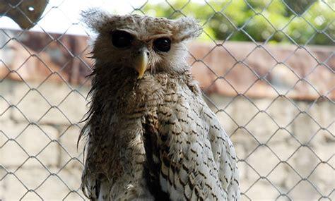 Pakan Walet Kalimantan walet 18 burung hantu silakan pergi bebeja