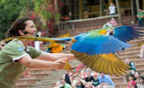 top 28 florida bird shows dolphin and bird show