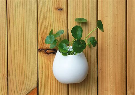 White Ceramic Wall Planter by Wall Mountable Planter Ceramic White Pot Wall Ceramic Vase