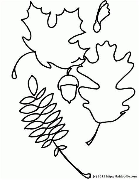 leaf identification coloring pages oak leaves coloring pages clipart panda free clipart