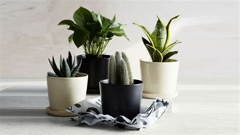 buy planters  flower pots  outdoor