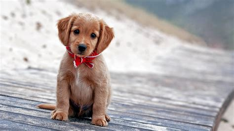 cute dog wallpapers for android desktop wallpaper box cute puppy wallpaper wallpaper studio 10 tens of