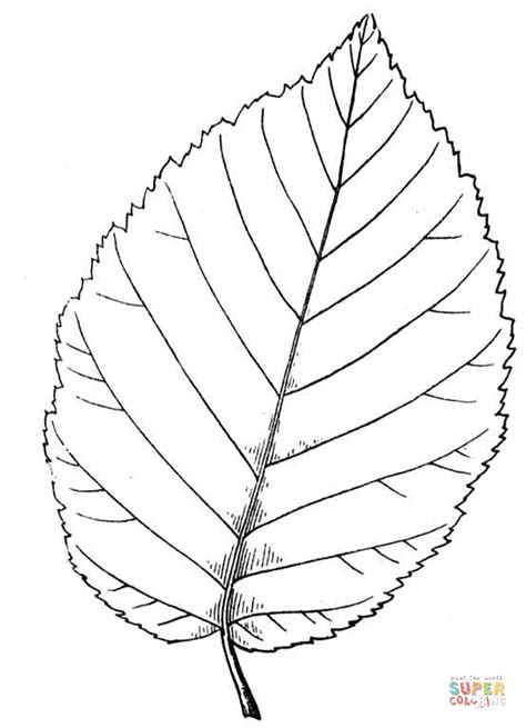 Birch Leaf Coloring Page | yellow birch leaf coloring page free printable coloring