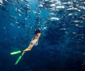 crystal freediving padi free diving school based on koh