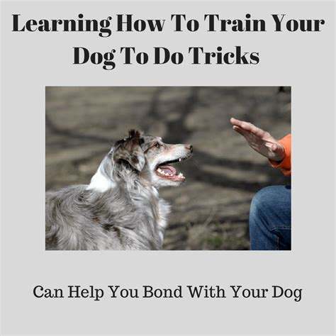 how to your to do cool tricks learning how to your to do tricks can be a lot of puppy and