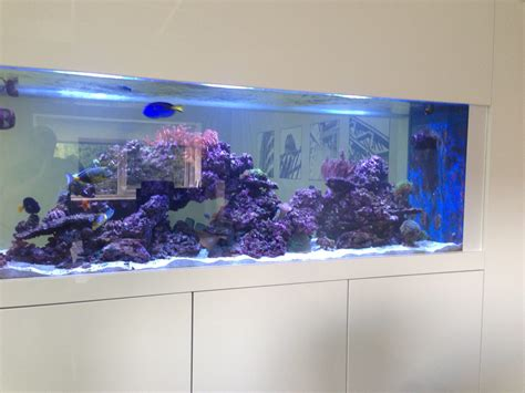 wall aquarium custom wall aquarium in newcastle oceanlife aquatics