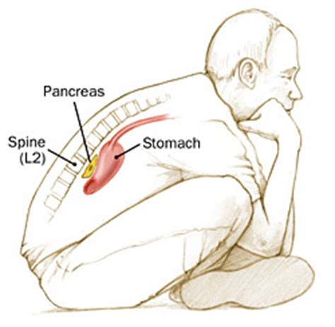 Pancreas Stool by Health Health
