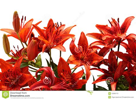 Bouquet Tiger bouquet of tiger lilies stock image image of blossom 10595113