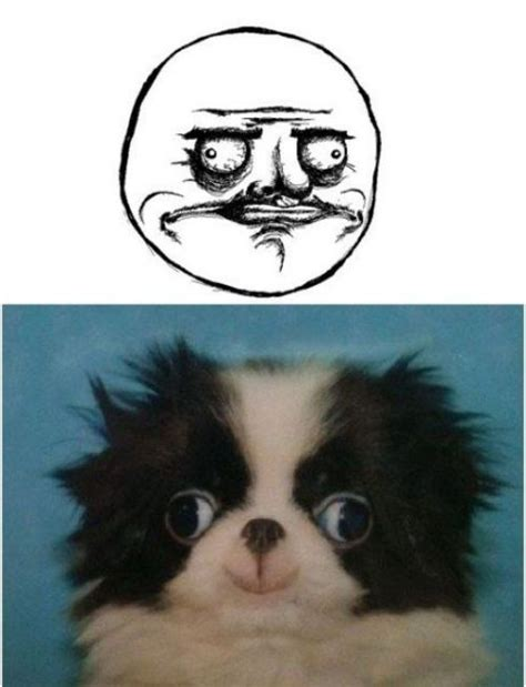 Dog Face Meme - dog face meme memes