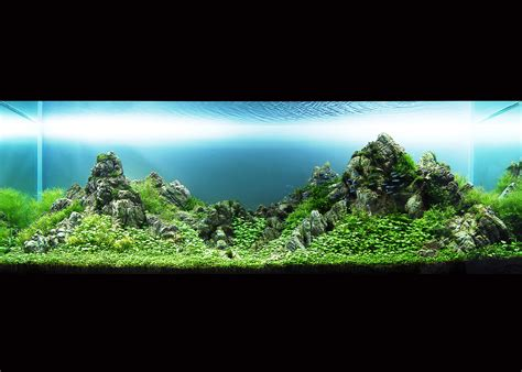 ada aquascaping 1000 images about planted aquarium on pinterest