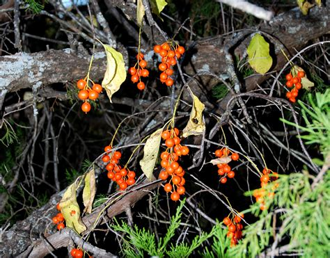 in search of fall red dirt ramblings 174