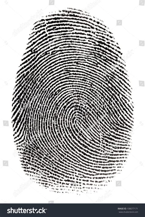 Where Can I Get Fingerprinted For A Background Check Real Fingerprint In White Background Macro Stock Photo 108077171