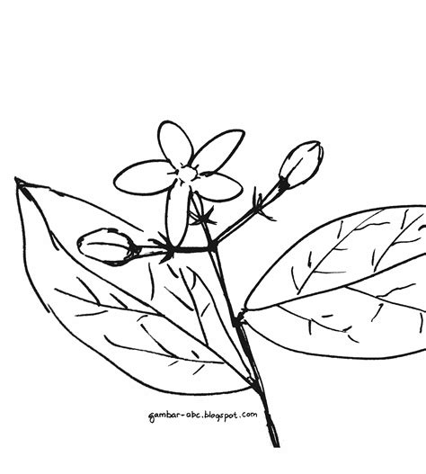 gambar daun untuk mewarnai belajar mewarnai