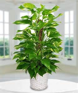 Heart Shaped Vases Pothos Plant Delivery In Boston Ma Central Square Florist