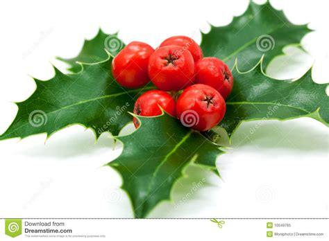 christmas leaf decoration with leaves and berries stock image image 10549765