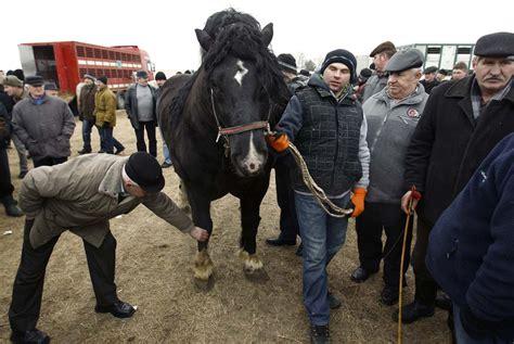 Aufkleber Drucken Celle by Skaryszew Horse Fair