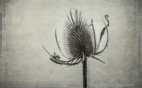 fine art posters and prints at artcouk john brown fine art prints natural history fine art