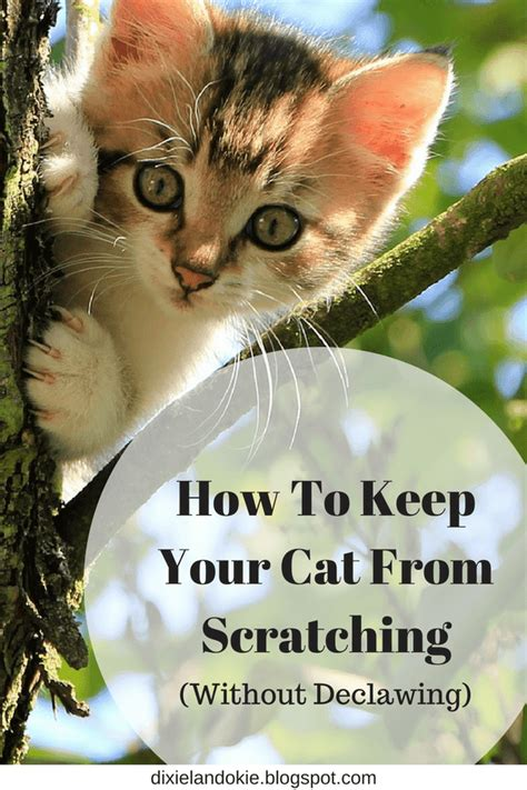 how to keep your cat from scratching your couch dixieland okie how to keep your cat from scratching