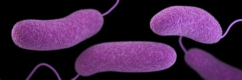 Wdsu 12 Days Giveaways - woman infected by flesh eating bacteria near grand isle