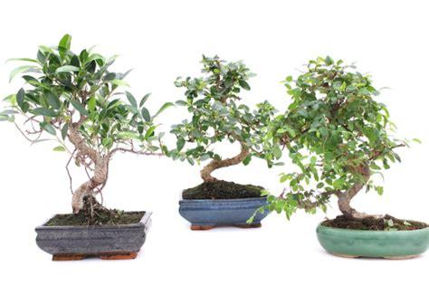 teknik mudah  membuat bonsai  pot  pemula