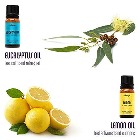 Review Bliss Eucalyptus Smoother by Natrogix Bliss Essential Oils Top 9 Therapeutic Grade