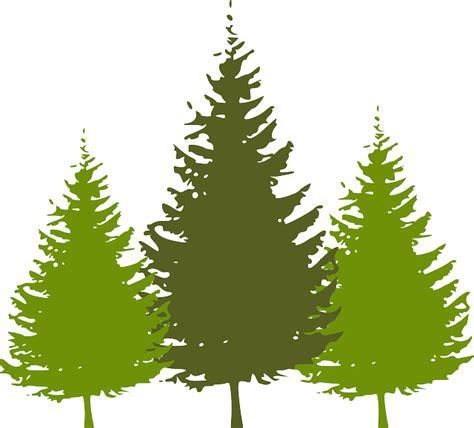 Pohon Natal Berkualitas Tipe Snow White Pine Tree Ukuran 9ft 2 7 Mtr free vector graphic trees forest conifer nature free image on pixabay 307669