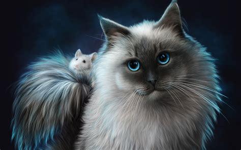 cat rat wallpaper cat and mouse cats wallpaper 39100456 fanpop
