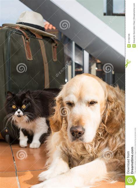 golden retriever books golden retriever puppies stock image breeds picture