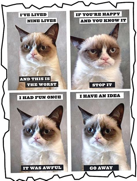 cheer up grumpy cat you re a million dollar megastar
