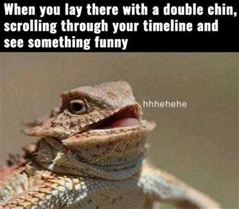 Hehehe Lizard Meme - funny animal pictures of the day 25 pics