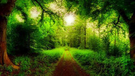 imagenes de naturaleza verdes paisajes fondos para fondo celular en hd 15 hd wallpapers
