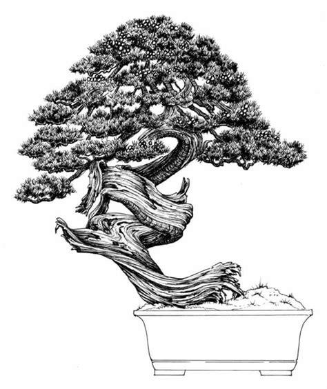 libro bonsai the art of dibujo del maestro venezolano nacho marin perteneciente a su libro 100 bonsai bonsai info