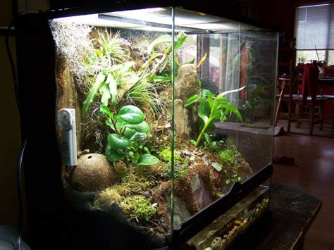 vivarium tank     enclosure options