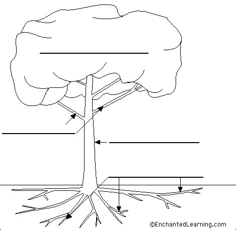 tree diagram coloring page step 2 sketch and label parts of a tree food pinterest